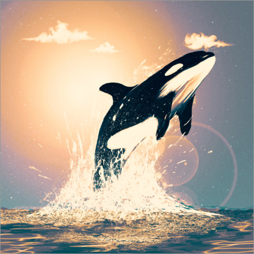 Premiumposter Orcas can fly