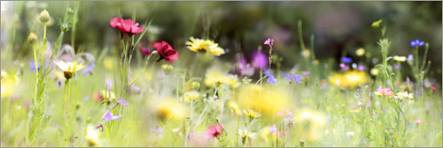Premiumposter Panorama of a wildflower meadow