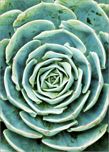 Premiumposter Succulents 2
