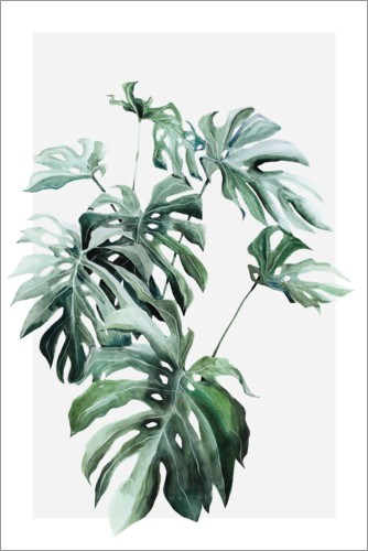 Premiumposter Monstera blad