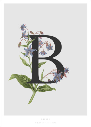 Premiumposter B is for Borage