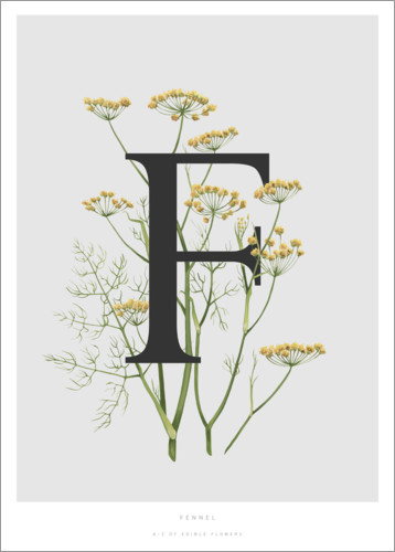 Premiumposter F is for Fennel
