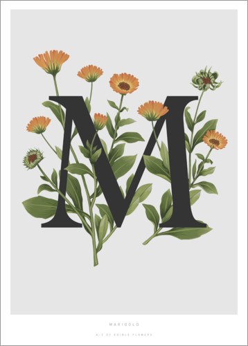Premiumposter M is for Marigolds