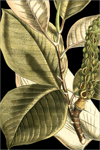 Premiumposter Tranquil Tropical Leaves II