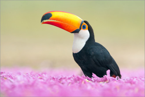 Premiumposter Toucan in the sea of flowers