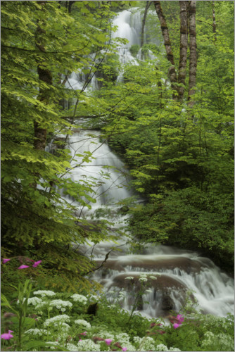 Premiumposter Waterfall with flowers in France