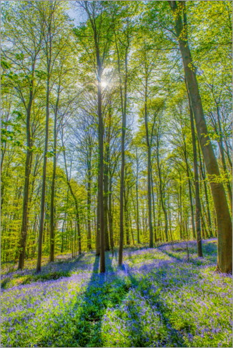 Premiumposter Blue Flowers Forest III