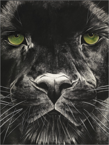 Premiumposter Panthers face