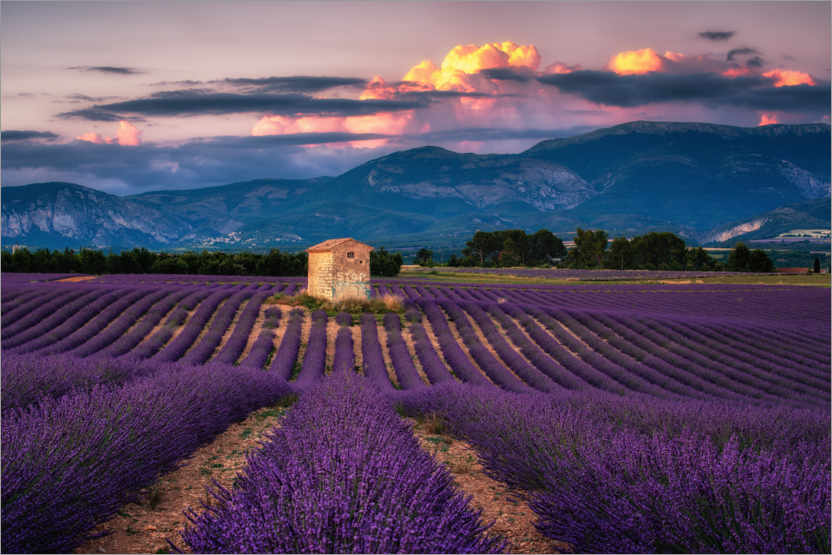 Premiumposter Evening mood in Provence