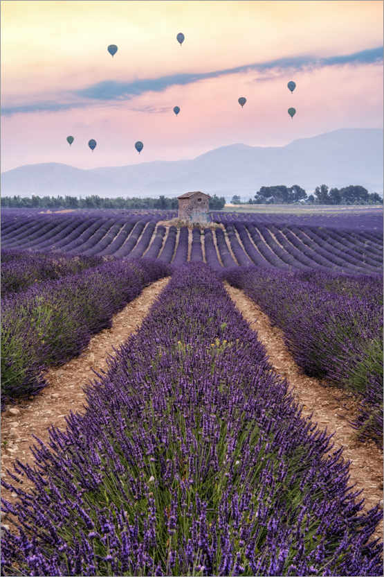 Premiumposter Balloonist over the sea of flowers
