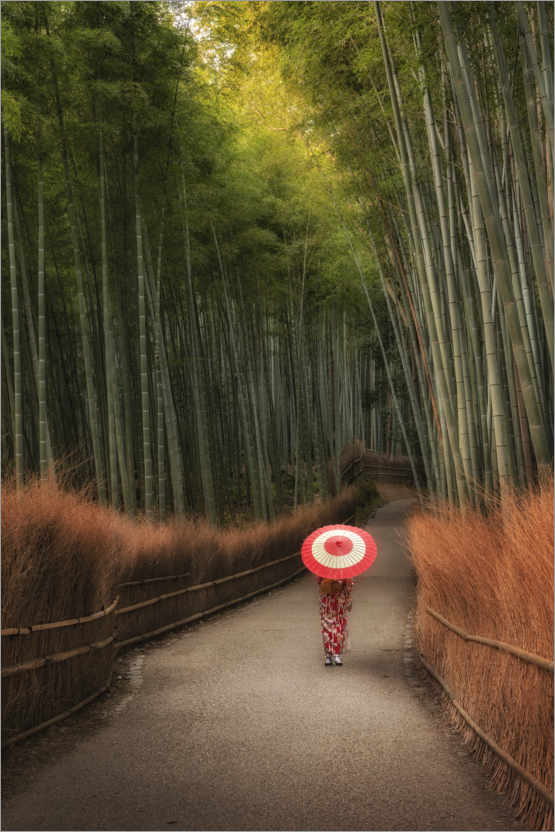 Premiumposter In the morning in the bamboo forest