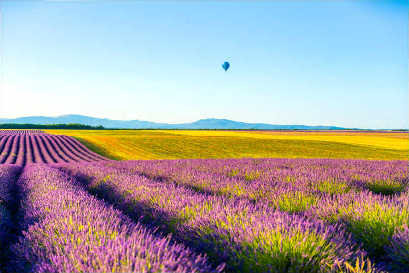 Premiumposter Lavender fields near Valensole in southern France