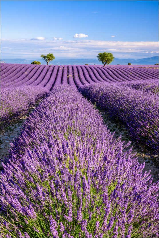 Premiumposter Summer in Provence