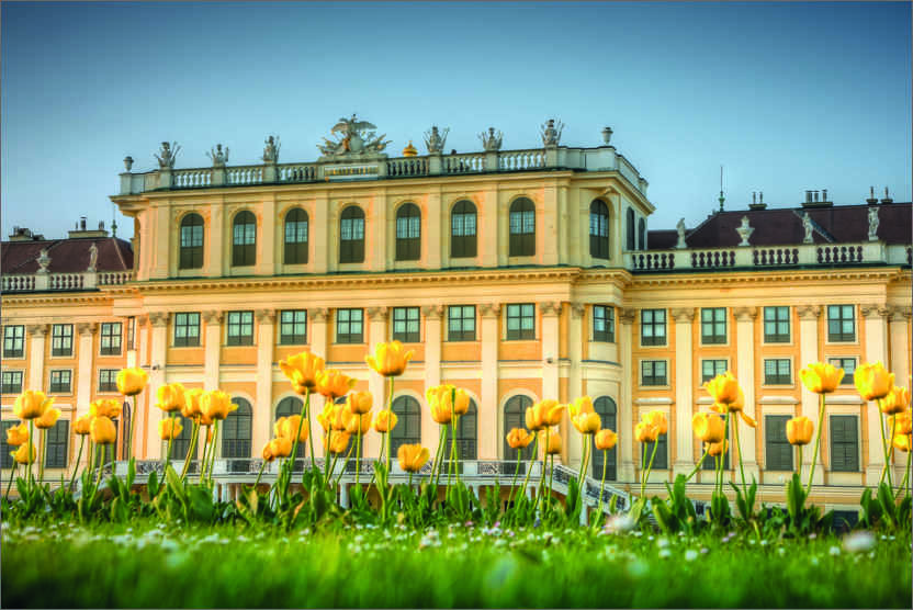 Premiumposter Tulips in front of Schönbrunn Palace