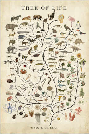 Premiumposter  Tree of Life - Studio W