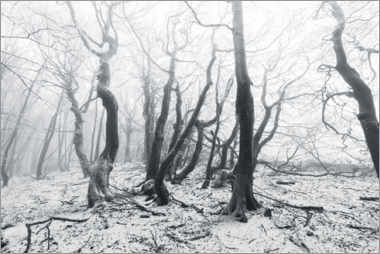 Canvastavla  Mystical forest in the snow and fog - The Wandering Soul
