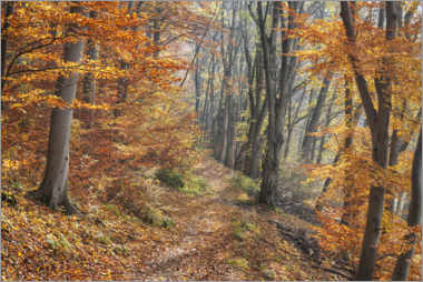 Canvastavla  Forest path in late autumn - The Wandering Soul