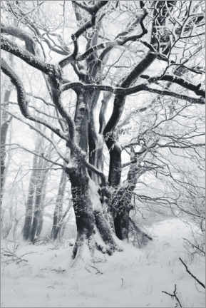 Canvastavla  Mystic tree in frost and snow - The Wandering Soul