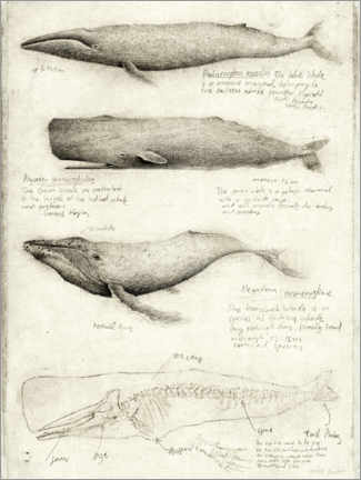 Canvastavla  Whales - Mike Koubou