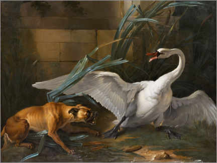Galleritryck  Swan attacked by a dog - Jean-Baptiste Oudry