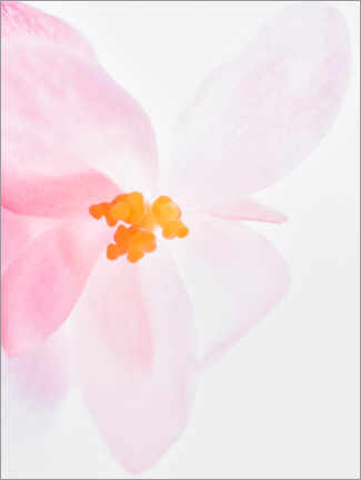 Premiumposter  Pink orchid I - Magda Izzard