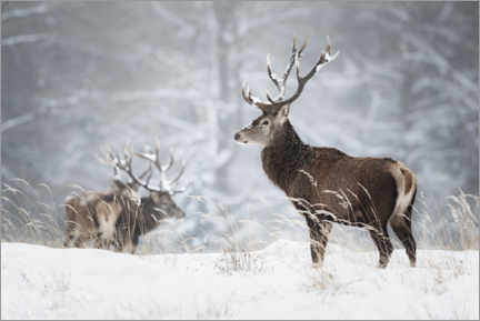 Aluminiumtavla  Deer in the snow - Moqui, Daniela Beyer