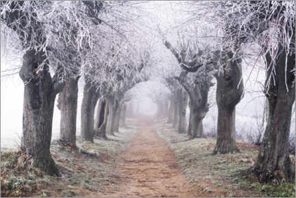 Trätavla  Linden avenue in the fog and hoarfrost - The Wandering Soul