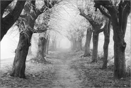 Galleritryck  Linden avenue in the fog on a winter morning - The Wandering Soul