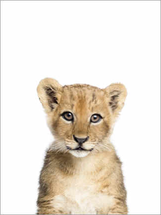 Premiumposter  Baby lion - Sisi And Seb