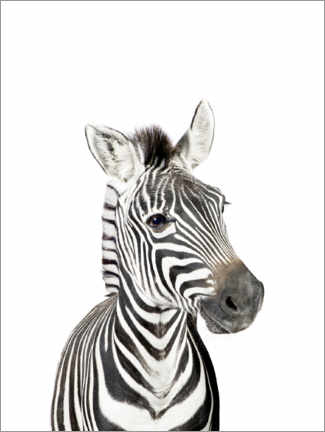 Premiumposter  Baby zebra - Sisi And Seb