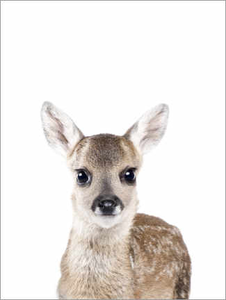 Premiumposter  Baby deer - Sisi And Seb
