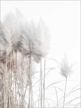 Canvastavla  Pampas grass II - Magda Izzard