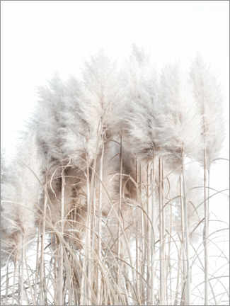 Canvastavla  Pampas grass I - Magda Izzard