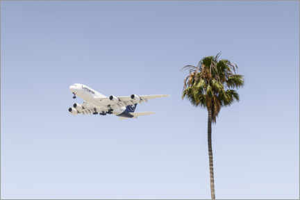 Galleritryck  Airbus A380 over palm trees - Ulrich Beinert
