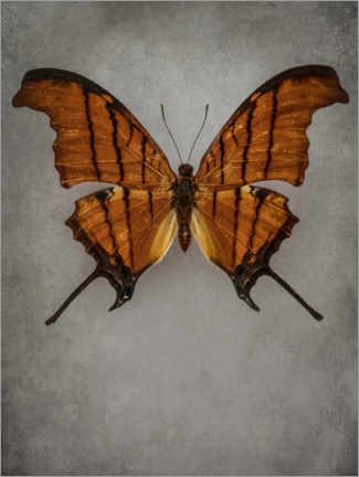 Premiumposter Vintage butterfly IV