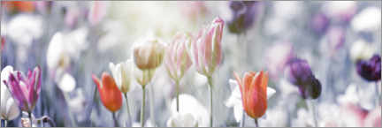 Premiumposter Tulips in pastel colors