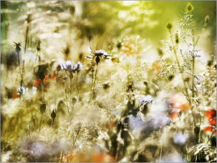 Premiumposter Magical wildflower meadow