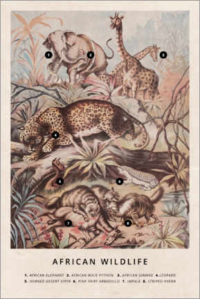 Akrylglastavla  African wildlife (vintage) - Wunderkammer Collection