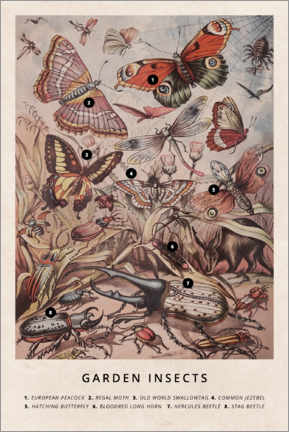 Självhäftande poster  Garden insects - Wunderkammer Collection