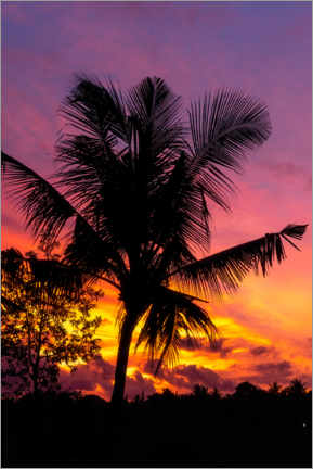 Premiumposter  Palm tree in the sunset - Road To Aloha