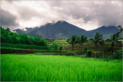 Premiumposter  Rice fields in Bali - Road To Aloha