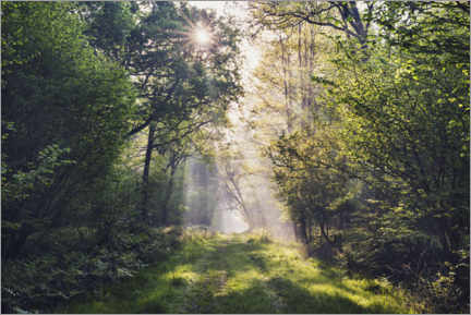 Galleritryck  Forest path with rays of light at sunrise - The Wandering Soul