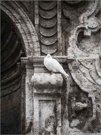 Premiumposter  Pigeon on the facade - Art Couture