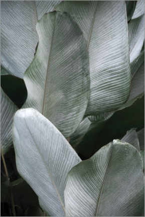Akrylglastavla  Tropical silver leaves - Studio Nahili