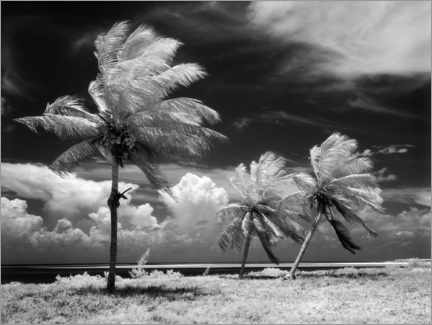 Premiumposter Palm trees in the storm