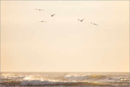 Premiumposter Seagulls fly over the North Sea
