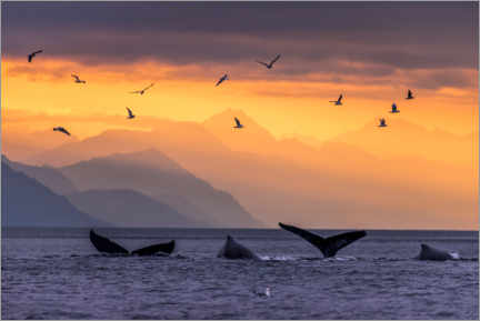 Premiumposter Humpback whale at sunset with the Chilkat Mountains