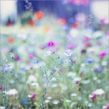 Akrylglastavla  Colorful flower meadow in summer - Nadja Jacke