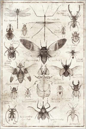 Premiumposter  Insects - Mike Koubou