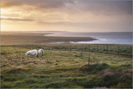 Canvastavla  Sheeps by the sea at sunset in Scotland - The Wandering Soul